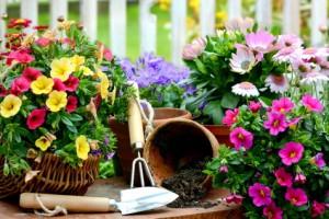 Clitheroe Garden Club